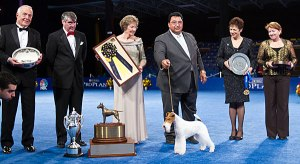 national dog show3